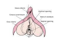 Average time to organsm during sex
